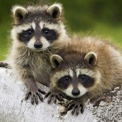 wildlife management control