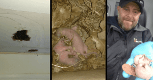 Baby Squirrels Found With Infrared Camera 2
