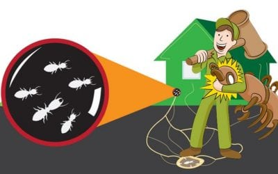 How to Prepare for Termite Season and Steps You Should Take