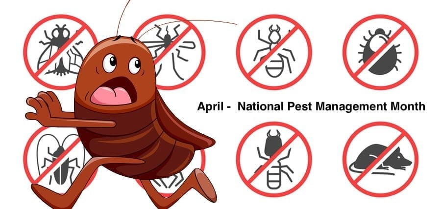 Proactive Steps to Take to Prevent Pest Infestations
