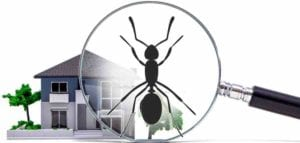 Are Ants Invading your home? Tips on what to do.
