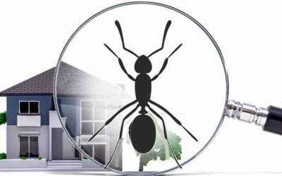 Are Ants Invading Your Home? Tips On What To Do