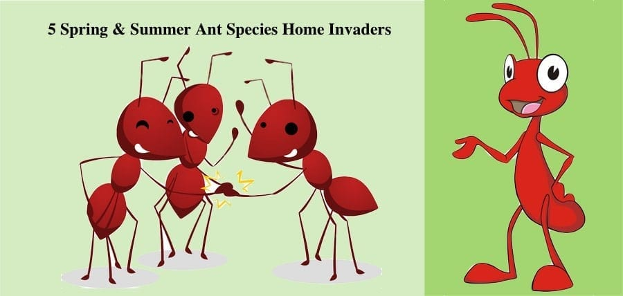 5 Spring & Summer Ant Species Home Invaders
