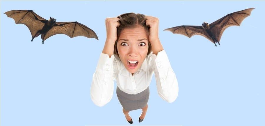 I Have Bats, What Do I Do?