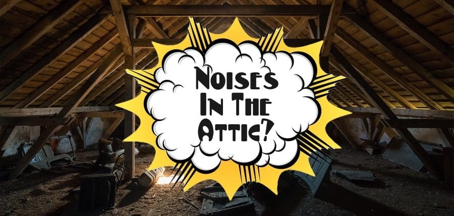 Noises In Attic! What to Do!