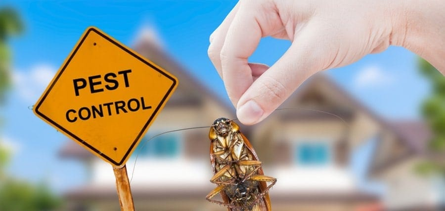 Why Pest Control Is Important and A High Priority