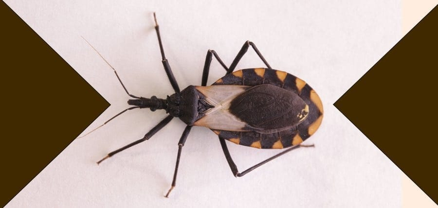 "Beware! Deadly ""Kissing Bug"" Threat to NJ"