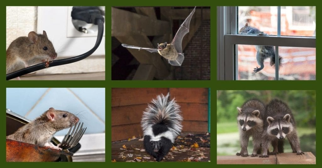 Wildlife pests looking for warmth can cause damage to your home