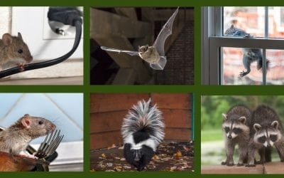 6 Wildlife Pests That May Find Warmth in Your Home This Winter