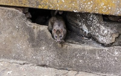 Commercial Wildlife Services Removal and Prevention