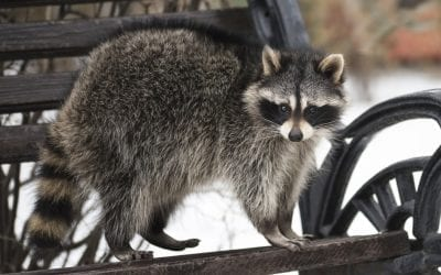 Wildlife Removal and Control Services