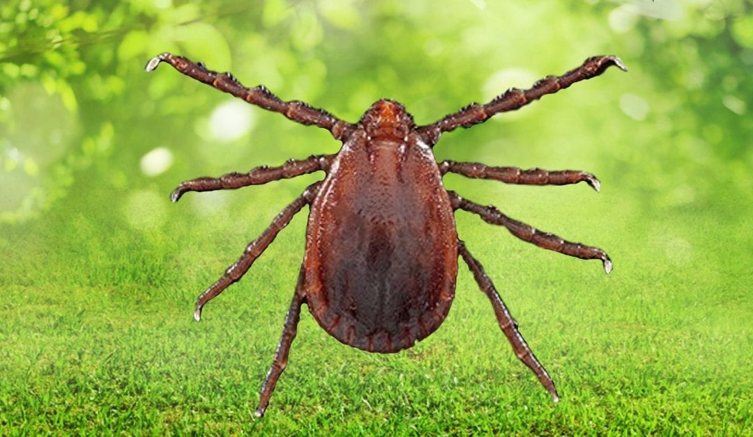 Asian Longhorned Tick Emerging Disease Threat To NJ