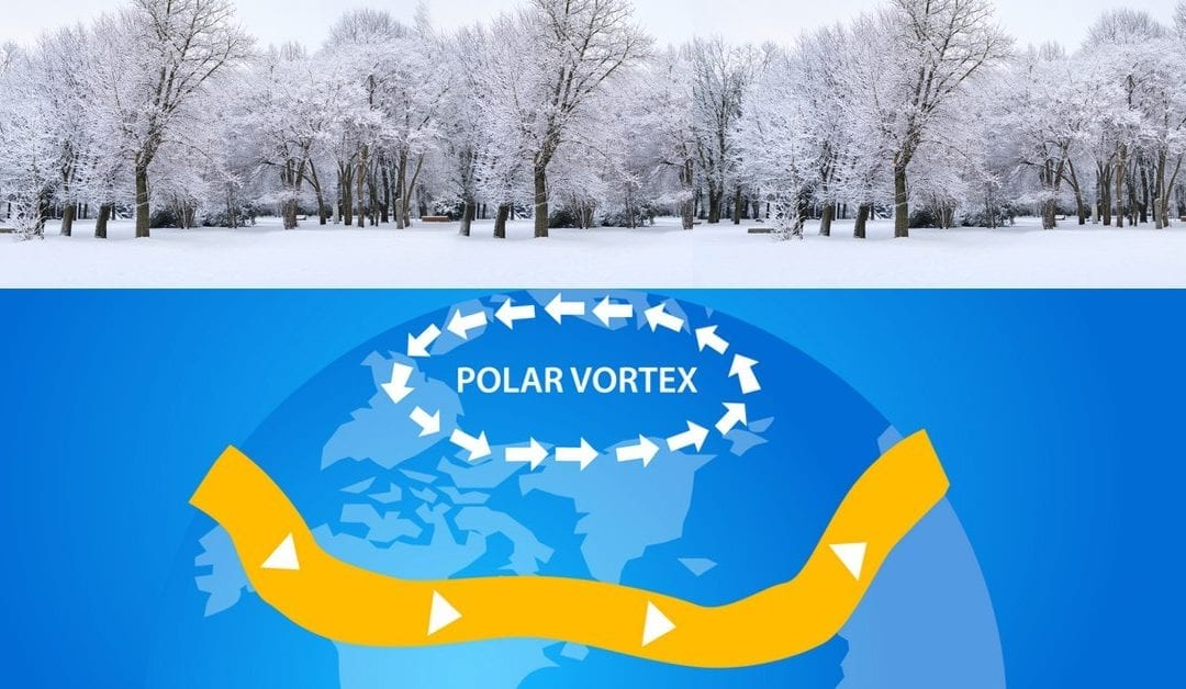 Good News! Polar Vortex May Have Killed Off Many NJ Pests