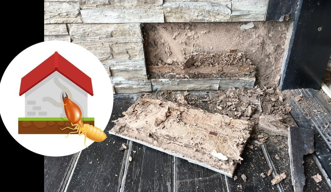 Termites? 7 Reasons to Hire a Professional Exterminator