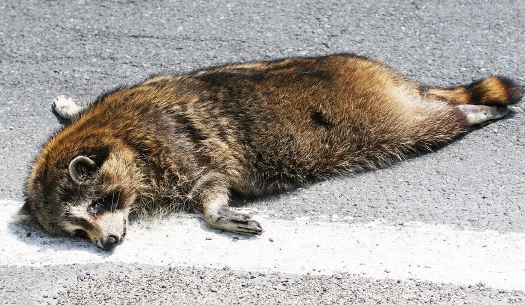 Wildlife Dead Animal Removal in New Jersey