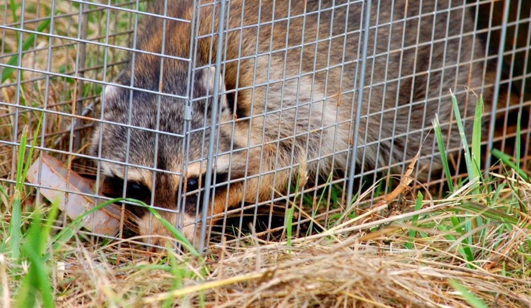 NJ Wildlife Removal and Control Specialist