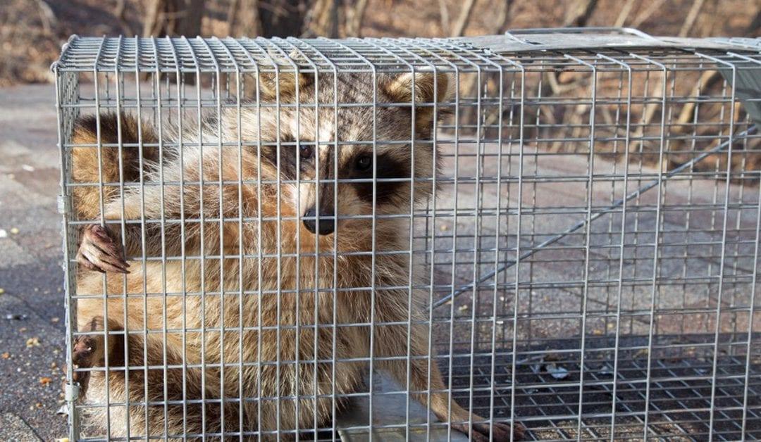 Humane Wildlife Animal Removal & Control, Morris County NJ