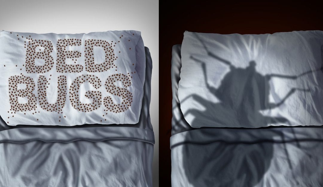 Bed Bugs in Hotels; How to Prevent Bedbug Problems While Traveling