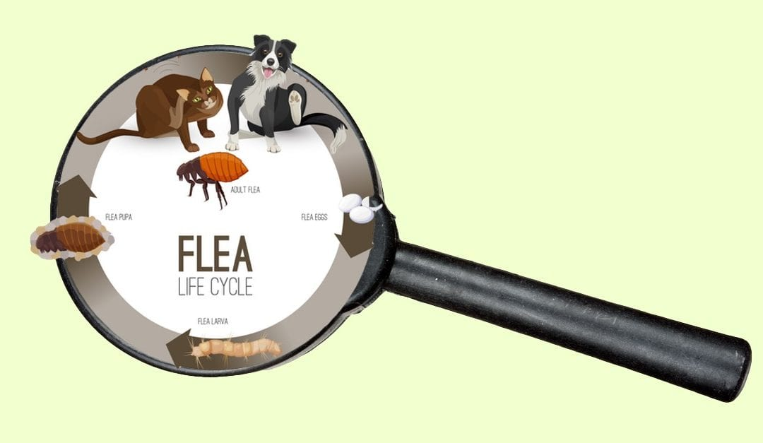 Fleas Hunker Down In Homes During The Winter