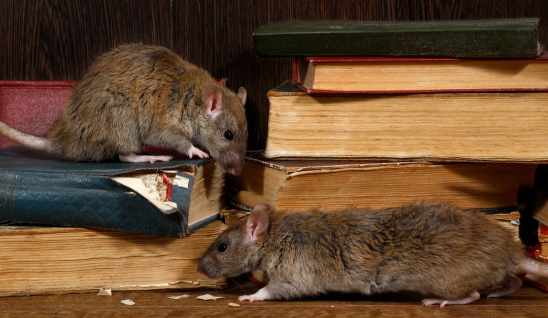 Tips for Rodent Control in the Winter