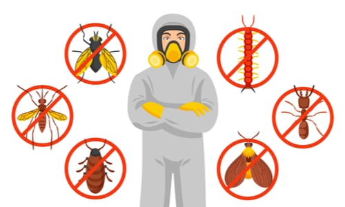 Bergen County Nj Pest Control And Wildlife Removal Near Me 1